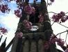 纽卡斯尔大学钟楼
