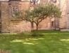剑桥大学牛顿苹果树